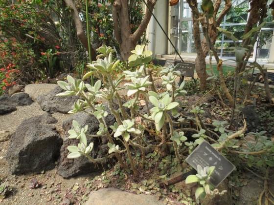 川口9.jpg