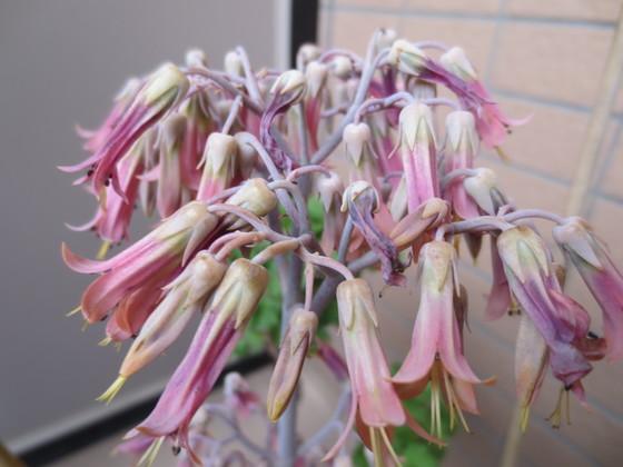 M1 flower.JPG