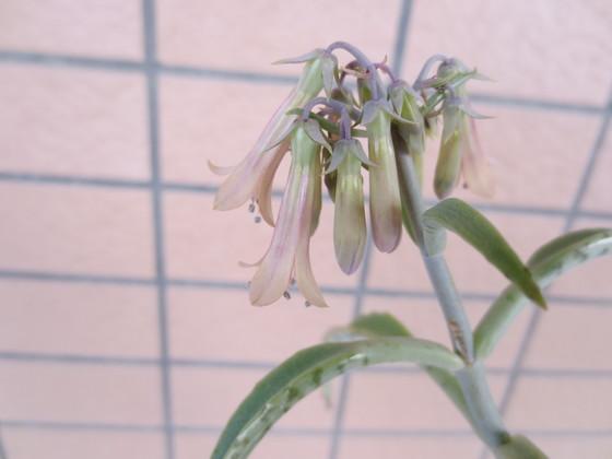 M2 flower.JPG